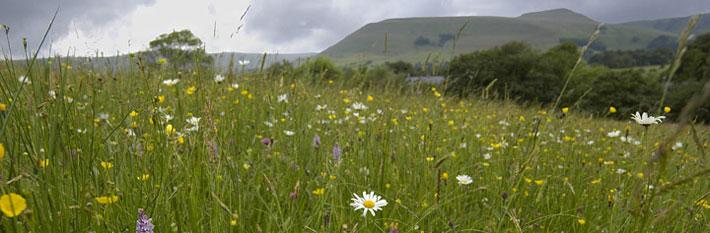 banner-meadow-flowers.jpg