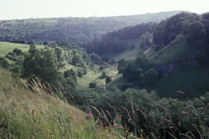 Tideswell Dale Quarry