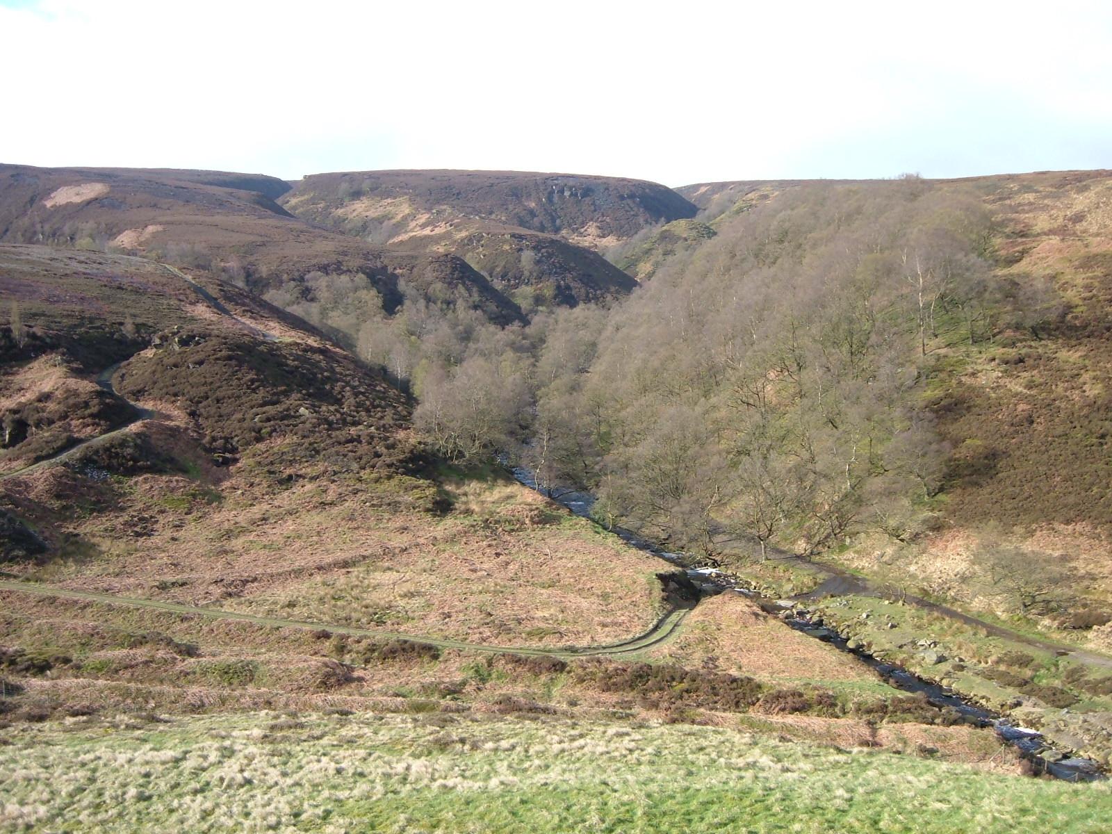 Clough-woodland-in-Longdendale-c-Chris-Tomson