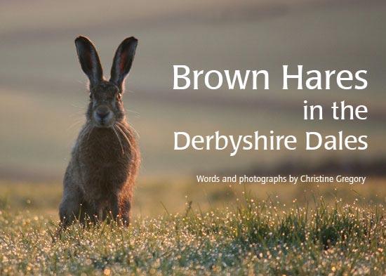 Brown Hares alt