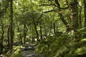 Upland oakwood